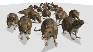 Photo of Rat race