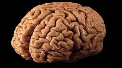 Photo of Does the brain really feel no pain?