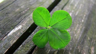 Photo of The Luck Factor