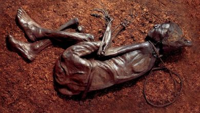 Photo of The Curious Case of the Bog Bodies