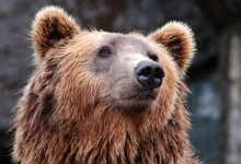 Photo of Bare or Bear With Me?